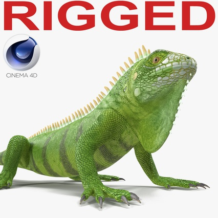 Green Iguana Rigged for Cinema 4D. Render 1