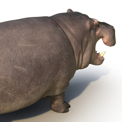 Hippopotamus Rigged for Cinema 4D. Render 21