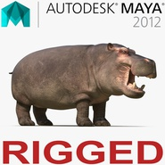 Hippopotamus Rigged for Maya