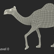 Camel Rigged for Cinema 4D. Preview 24