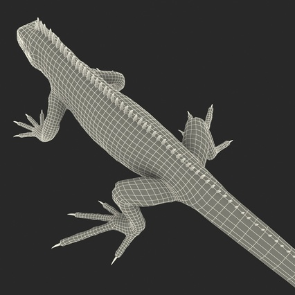 Green Iguana Rigged for Cinema 4D. Render 31