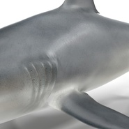 Caribbean Reef Shark. Preview 33