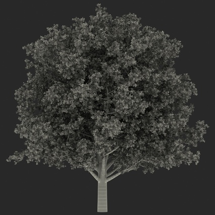 White Oak Tree Summer. Render 20