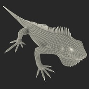Green Iguana Rigged for Cinema 4D. Preview 33