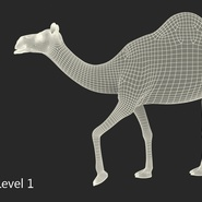 Camel Rigged for Cinema 4D. Preview 25