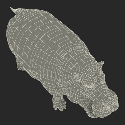 Hippopotamus Rigged for Cinema 4D. Render 32