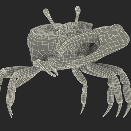 Fiddler Crab Standing Pose with Fur. Render 4