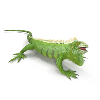 Green Iguana Rigged for Cinema 4D. Render 6