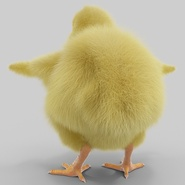 Chick with Fur. Preview 7