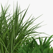 Grass Collection. Preview 12