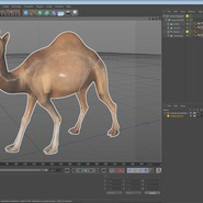Camel Rigged for Cinema 4D. Preview 23