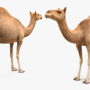 Camel Rigged for Cinema 4D. Preview 11
