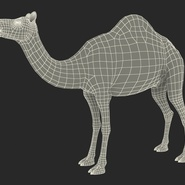Camel Rigged for Cinema 4D. Preview 28