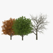 White Oak Tree Collection
