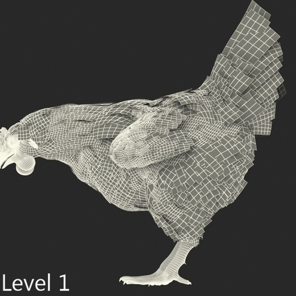 White Chicken Eating Pose. Render 12