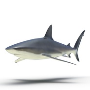 Dusky Shark Rigged for Maya. Preview 7