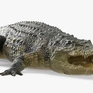 Crocodile Rigged for Maya. Preview 6