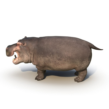 Hippopotamus Rigged for Cinema 4D. Render 10