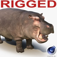 Hippopotamus Rigged for Cinema 4D. Preview 1