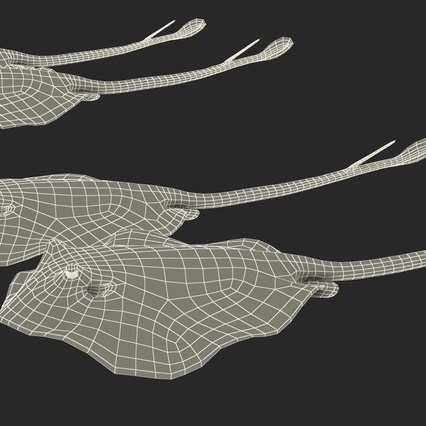 Stingray Rigged Collection. Render 38