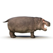 Hippopotamus Rigged for Cinema 4D. Preview 9