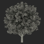 White Oak Tree Summer. Preview 4