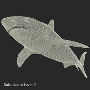 Caribbean Reef Shark. Preview 35