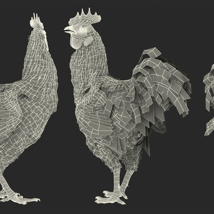 Brown Hen Rigged for Maya. Render 23