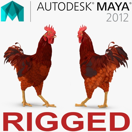 Brown Hen Rigged for Maya. Render 1
