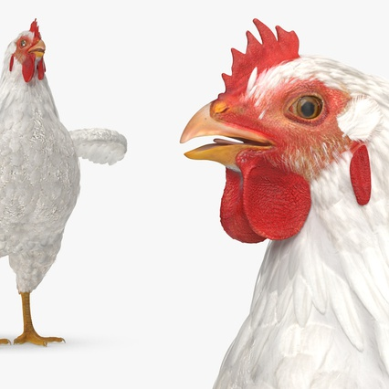 White Chicken. Render 6
