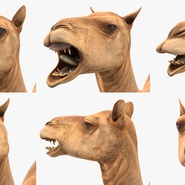 Camel Rigged for Cinema 4D. Preview 21