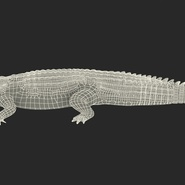 Crocodile Rigged for Maya. Preview 4