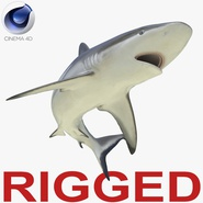 Grey Reef Shark Rigged for Cinema 4D