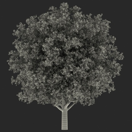 White Oak Tree Summer. Render 21