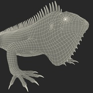 Green Iguana Rigged for Cinema 4D. Preview 36