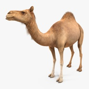 Camel Standing Pose
