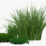Grass Collection. Preview 11