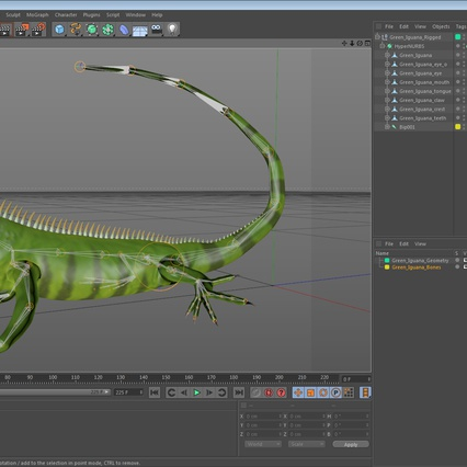 Green Iguana Rigged for Cinema 4D. Render 25