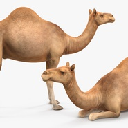 Camel Rigged for Cinema 4D. Preview 13