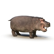 Hippopotamus Rigged for Cinema 4D. Preview 2
