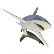 Dusky Shark Rigged for Maya. Preview 15