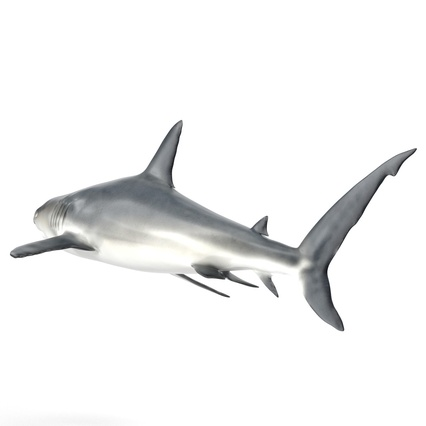 Caribbean Reef Shark. Render 11