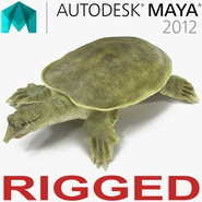 Chinese Softshell Turtle Rigged for Maya