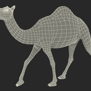 Camel Rigged for Cinema 4D. Preview 30