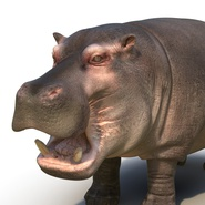 Hippopotamus Rigged for Cinema 4D. Preview 22