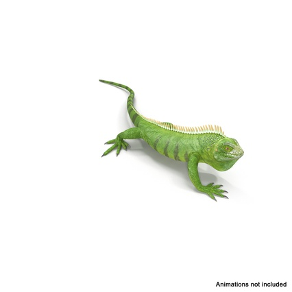 Green Iguana Rigged for Cinema 4D. Render 3