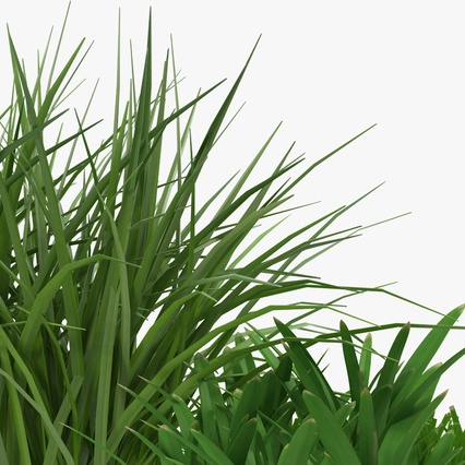 Grass Collection. Render 12