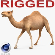 Camel Rigged for Cinema 4D. Preview 1