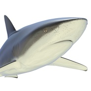 Dusky Shark Rigged for Maya. Preview 22