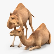 Camel Rigged for Cinema 4D. Preview 14